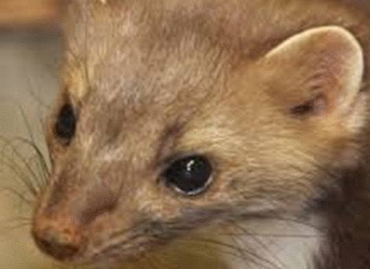 Comment se dbarrasser des souris dans une maison comment for Attraper souris maison