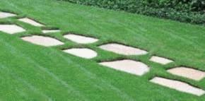 Enlever mauvaises herbes tout pratique - Identifier mauvaise herbe gazon ...
