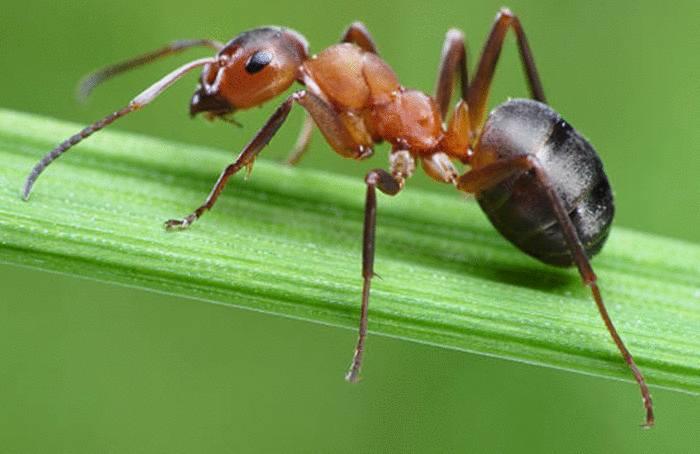 meilleures astuces anti fourmis