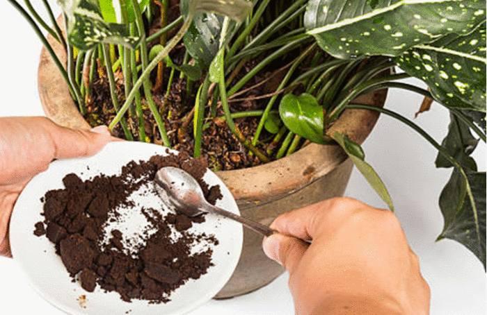 marc de café utilisation et bienfaits pour la maison