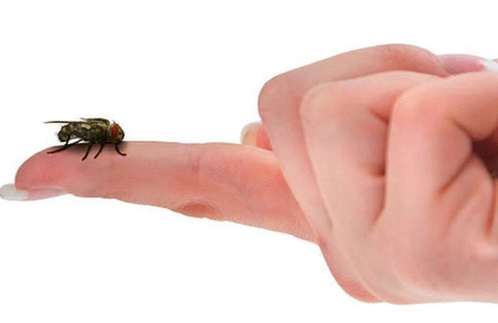 meilleure astuce contre les mouches