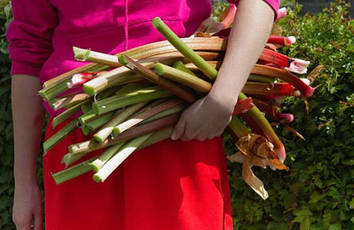 comment faire un super nettoyant avec la rhubarbe