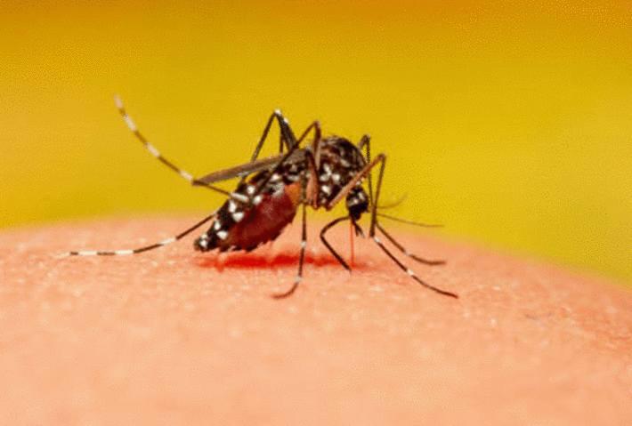 pourquoi je me fais piquer par des moustiques